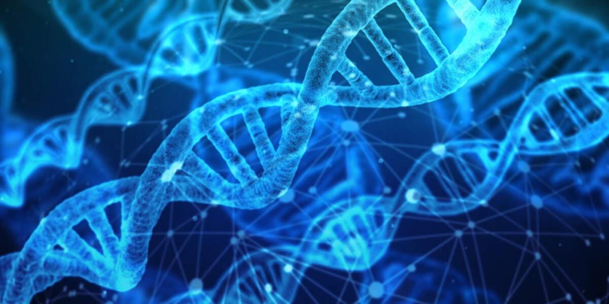 Una cadena d'ADN