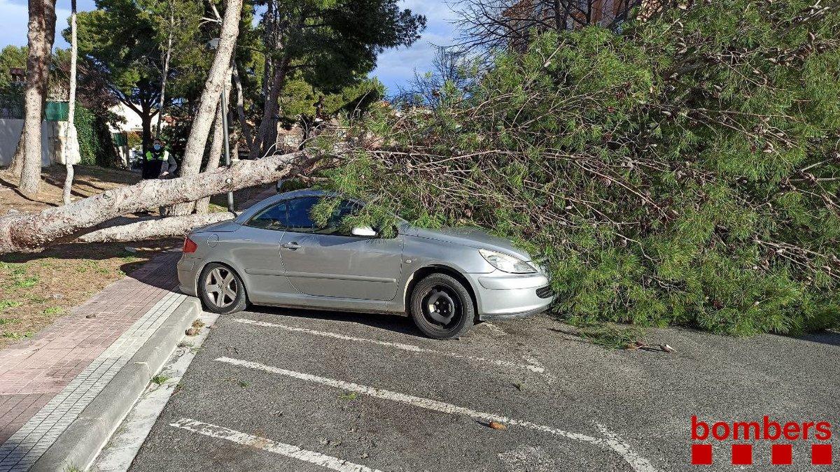 Un arbre caigut pel vent enmig d'un carrer