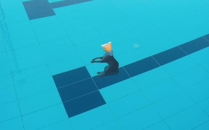 El gat mort flotant a la piscina
