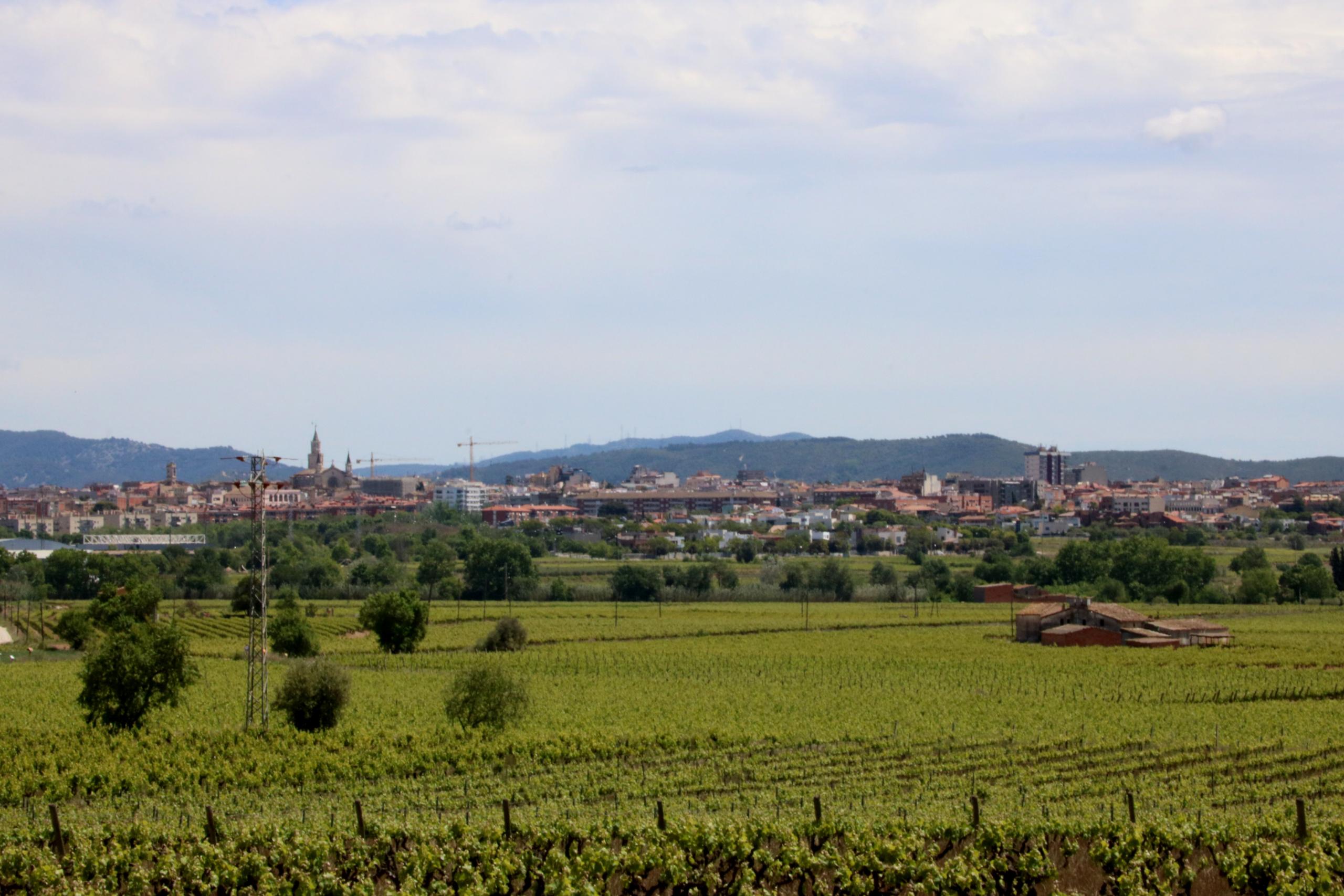 Vista exterior de Vilafranca del Penedès des d'una vinya propera   ACN
