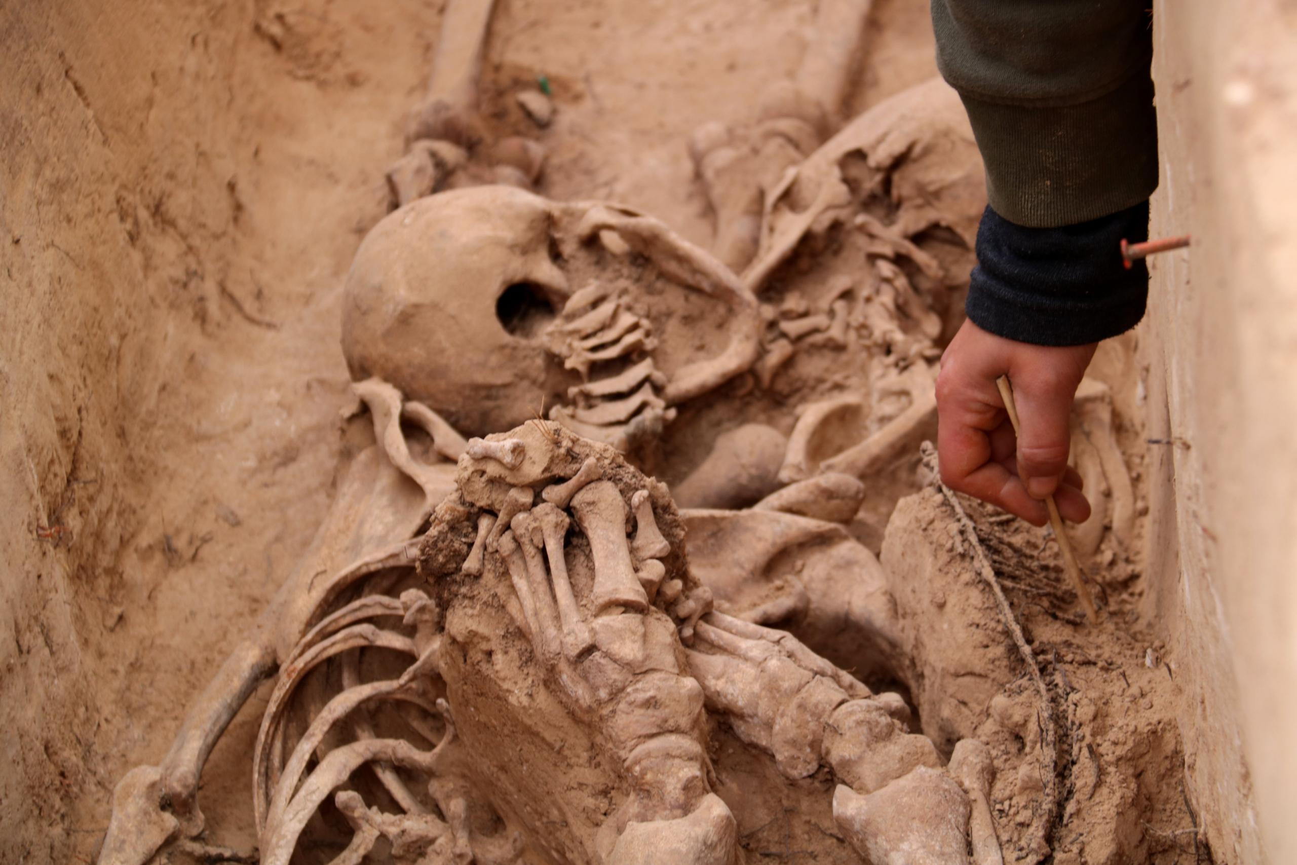 Les restes d'un dels cossos desenterrats d'una fossa de la batalla de l'Ebre al Mas de Santa Magdalena, a Móra d'Ebre | ACN