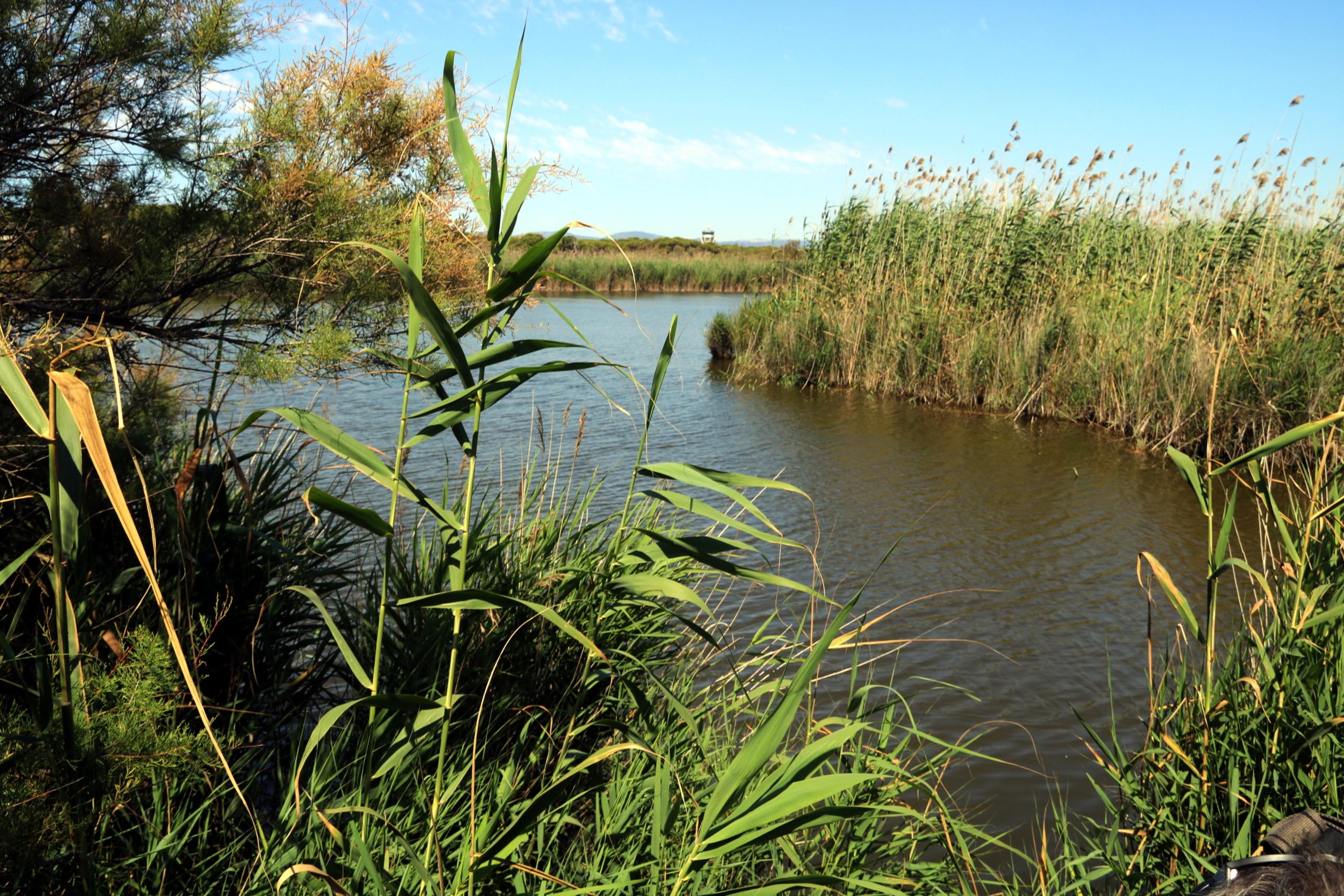 L'estany de la Ricarda | ACN