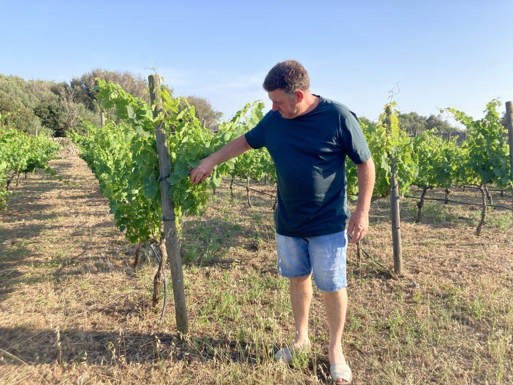 Les vinyes de Son Cremat, amb el seu propietari