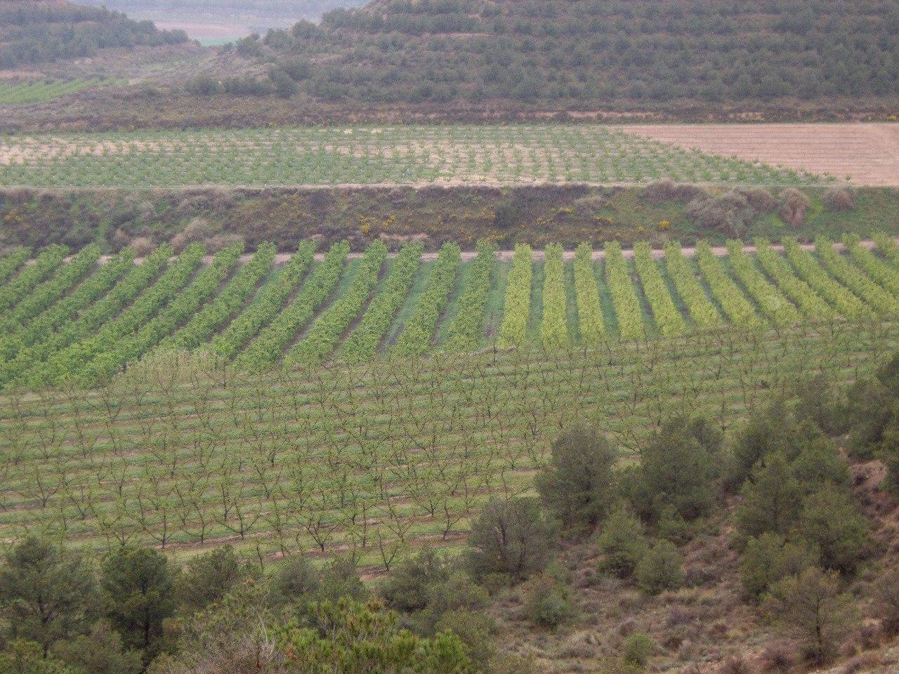Paisatge agrari a les Balears | CAIB