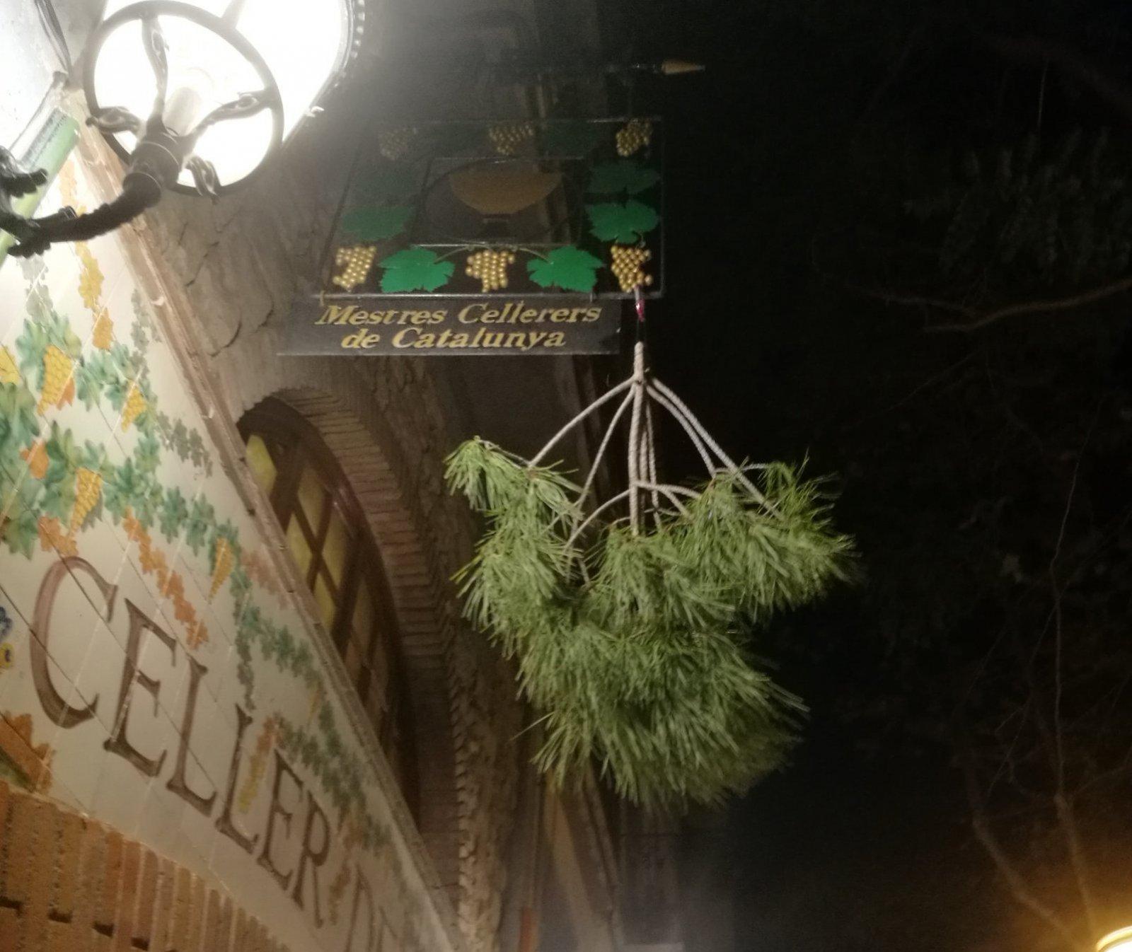 La branca de pi que anuncia l'arribada del vi novell al Celler de Gelida