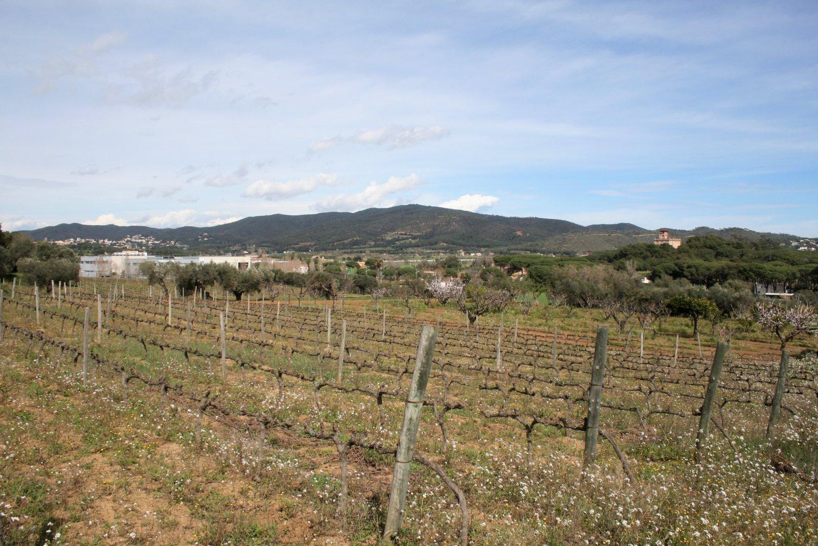 Les Gavarres vistes des de les vinyes del Mas Eugeni. A la dreta, la Torre Roure.