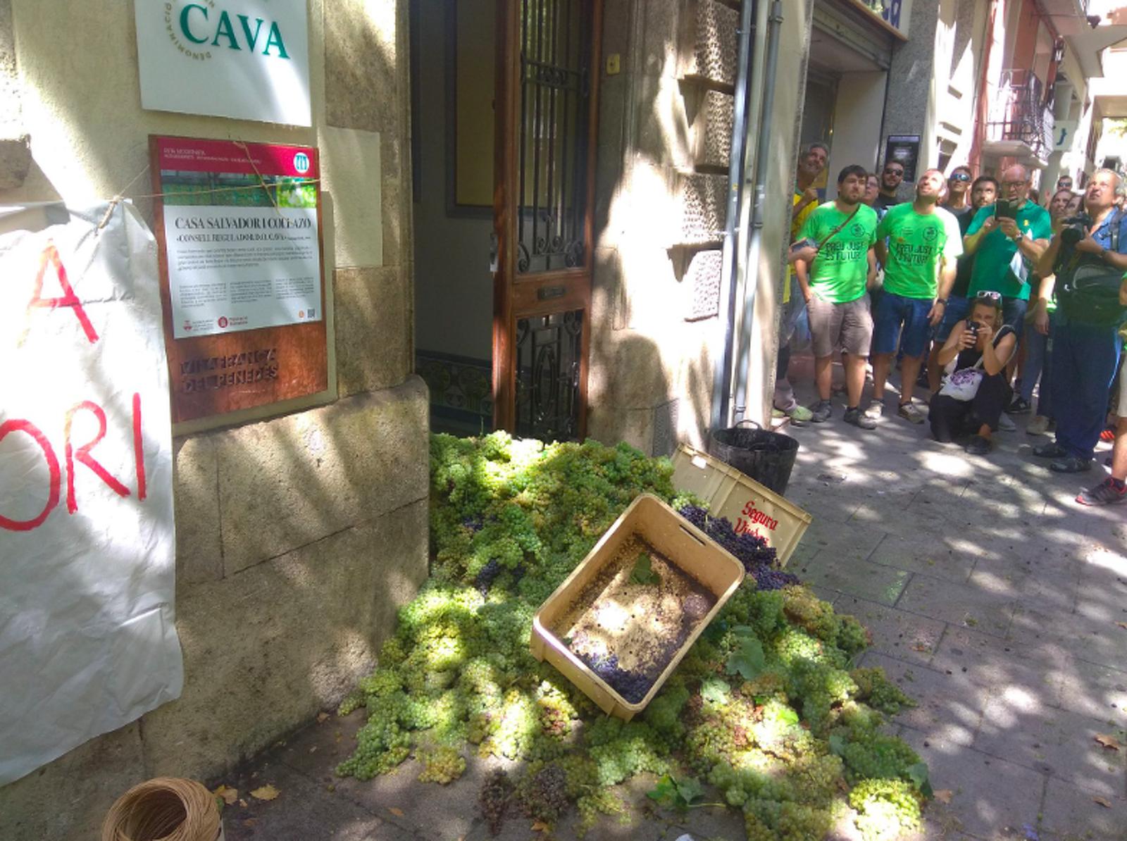 L'associació Joves Viticultors del Penedès ha abocat raïm i ampolles de cava a la seu de la DO Cava