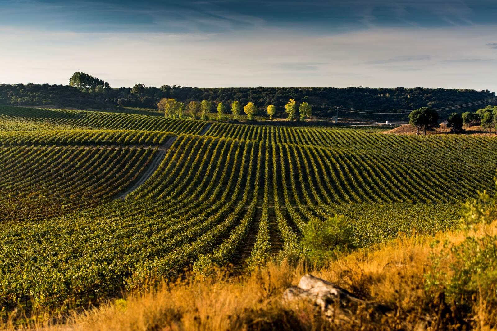 Les vinyes de Raimat