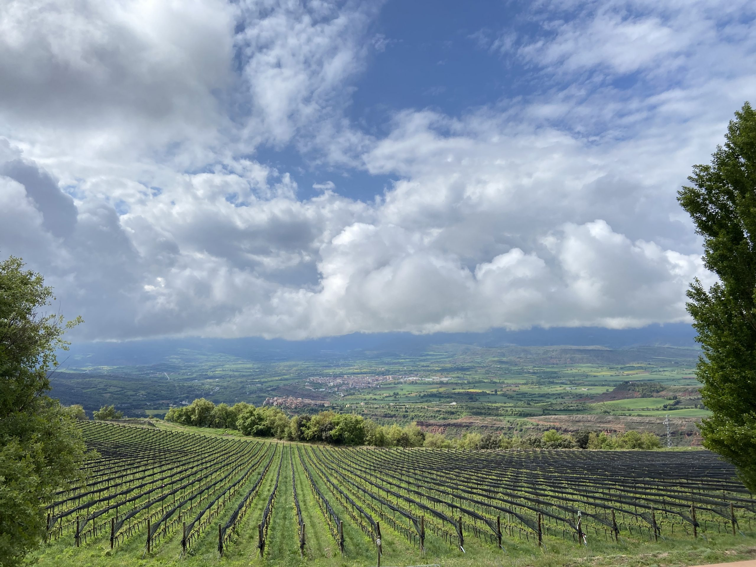 Paisatge de vinya des de Castell d'Encús   Ruth Troyano