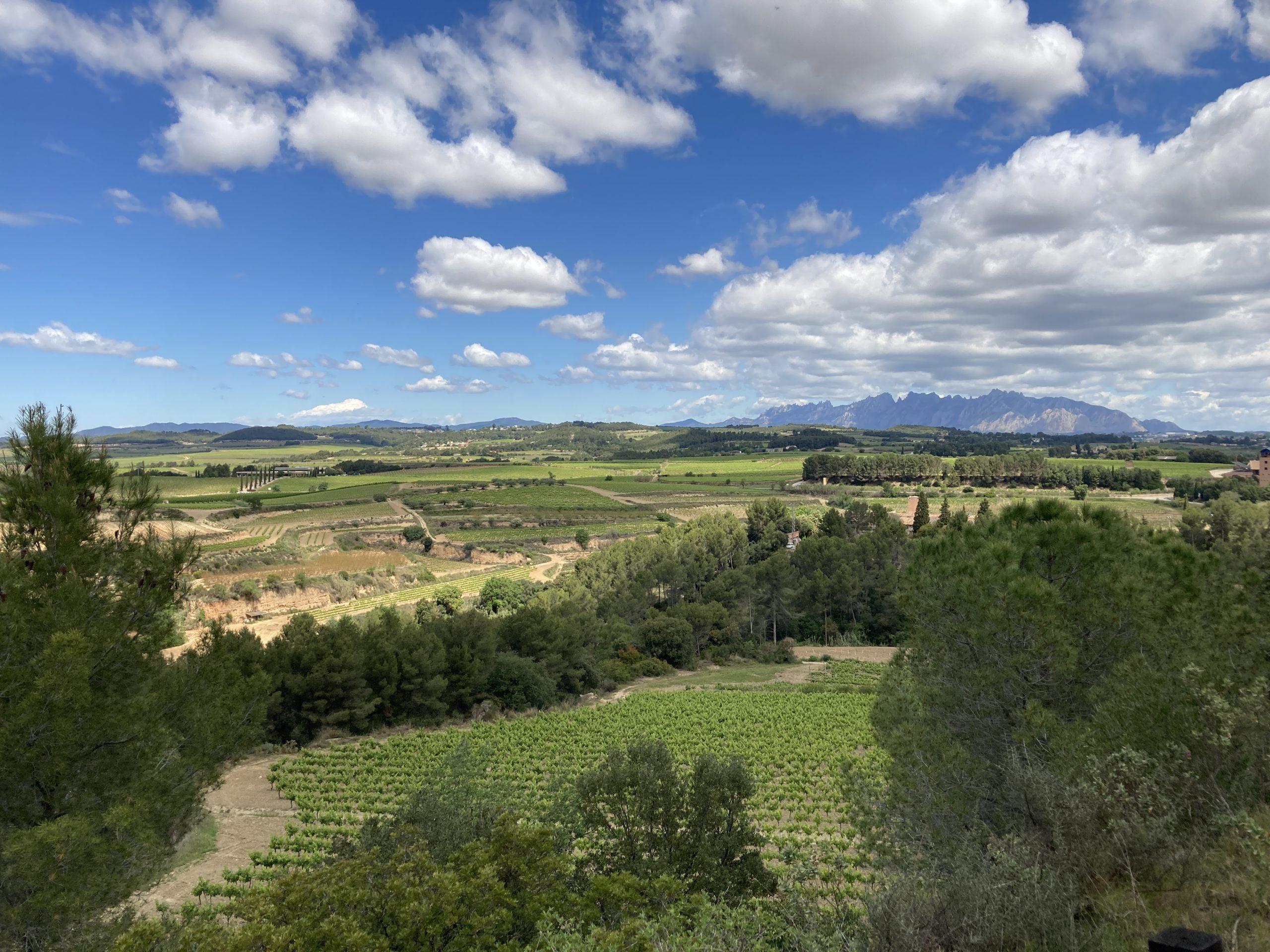 Paisatges de vinya que vol protegir l'Associació Espiells Terra de Vi | E.V.