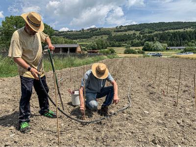 Plantació de vinya a Llívia | INCAVI