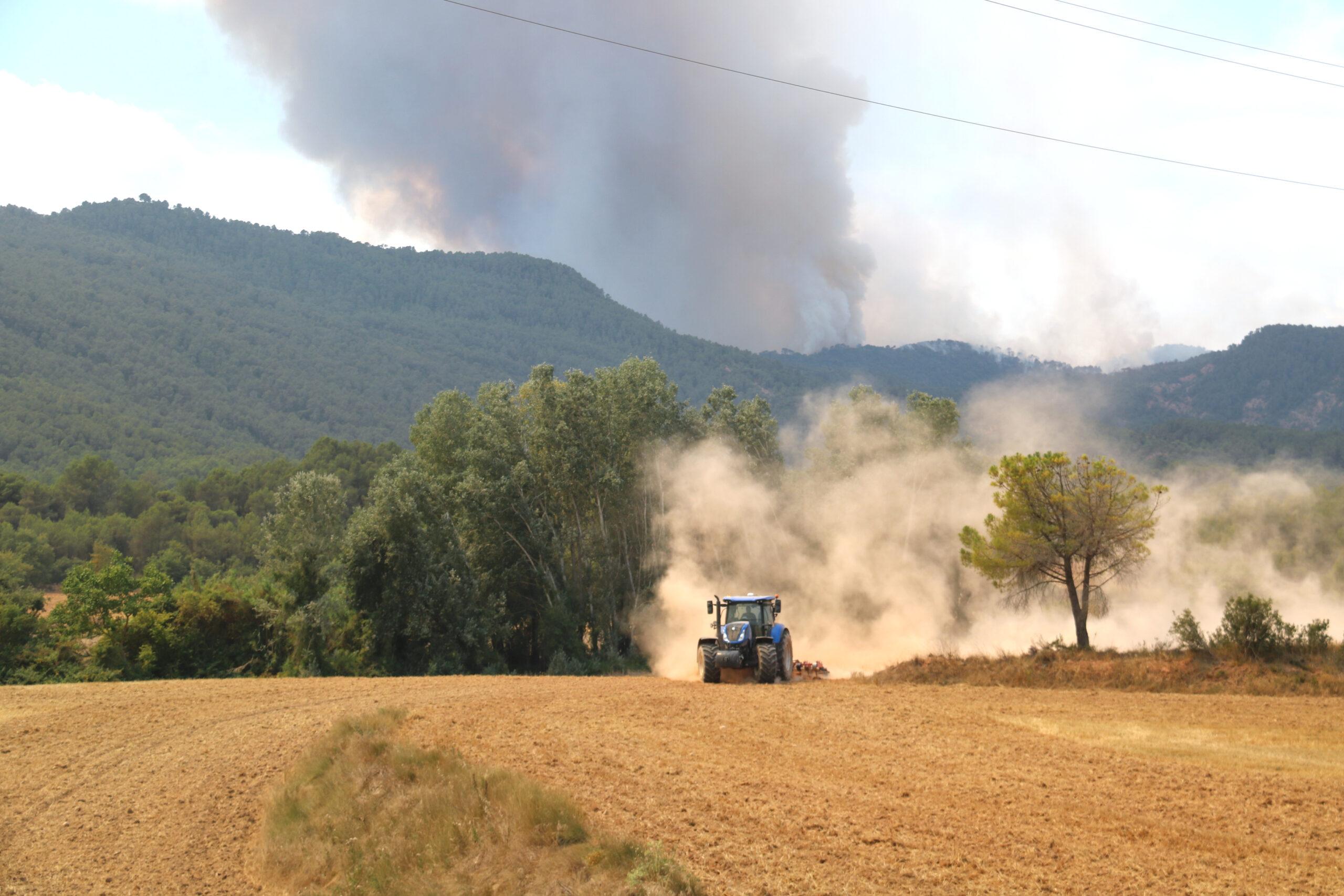 Camp de cereal segat a Sant Martí de Tous, davant la columna de fum del foc   ACN