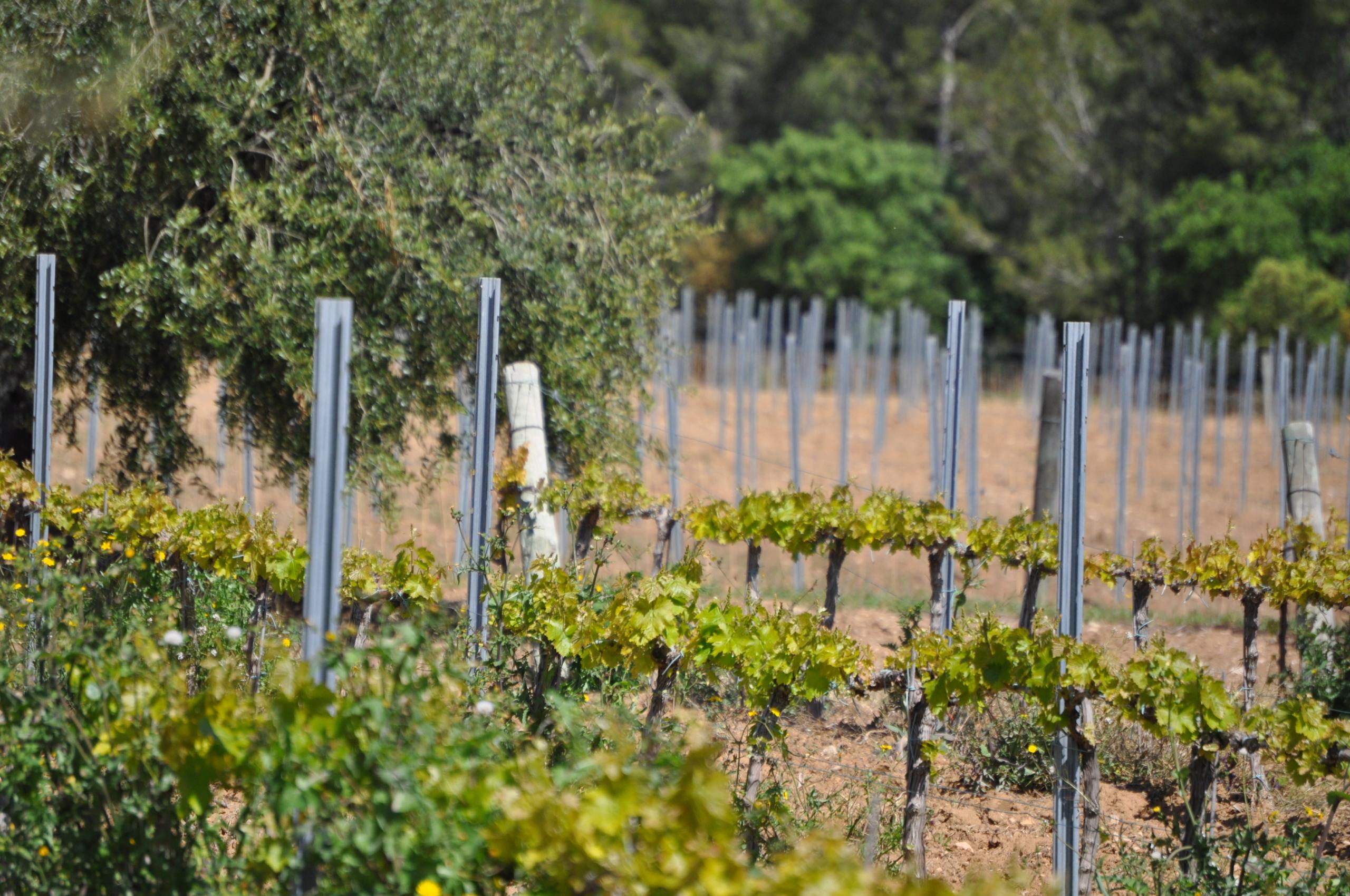 Paisatge agroforestal al Penedès | Soazig Darnay