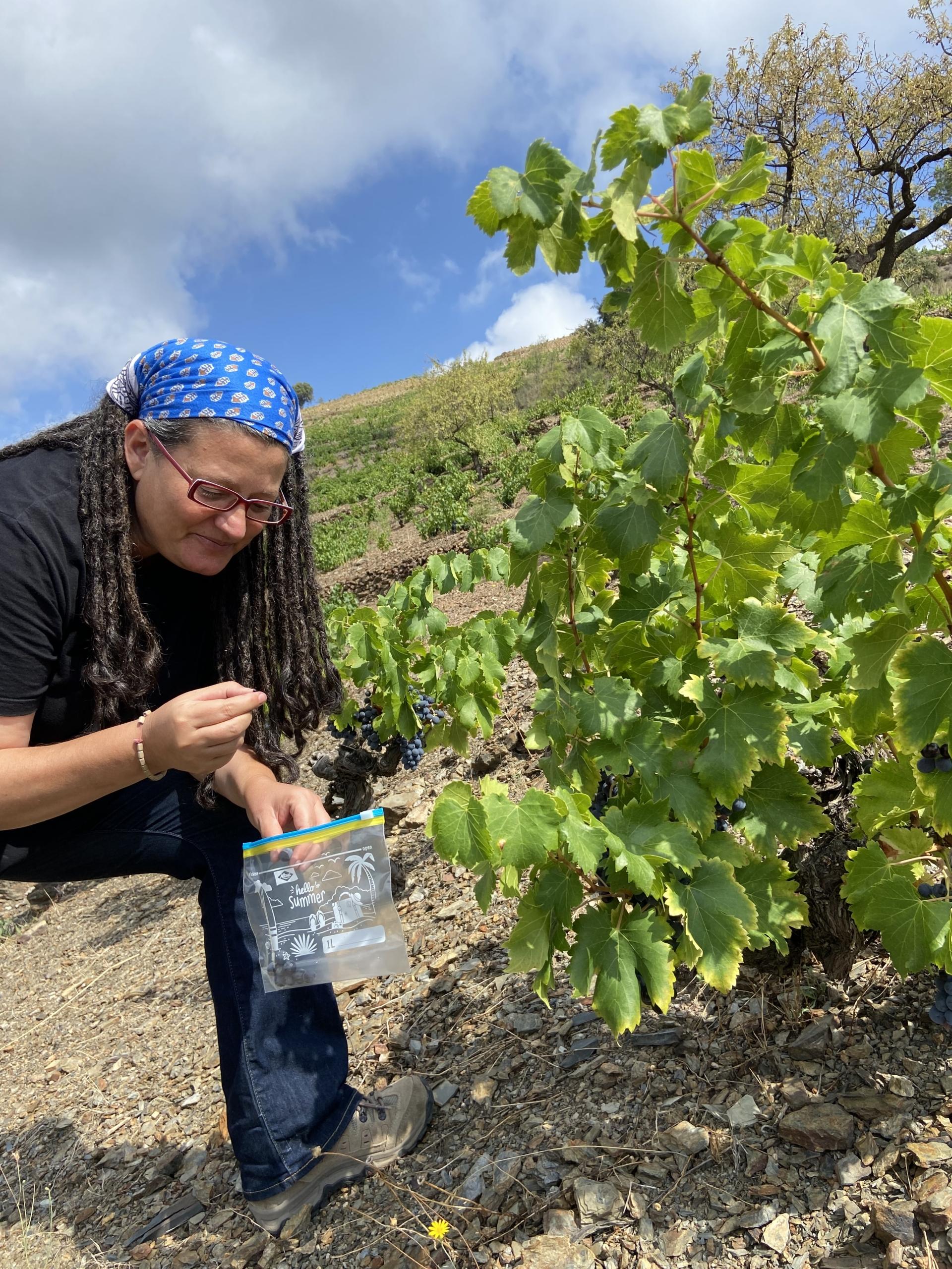 Esther Nin a les seves vinyes del Priorat | R.T.