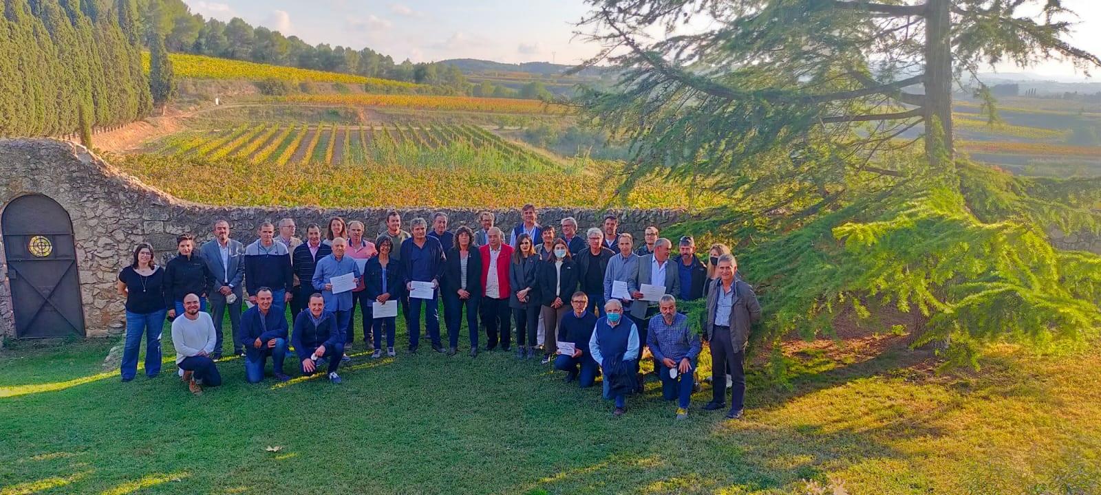 Premi als viticultors que detecten les primeres taques de míldiu a la vinya   Gencat