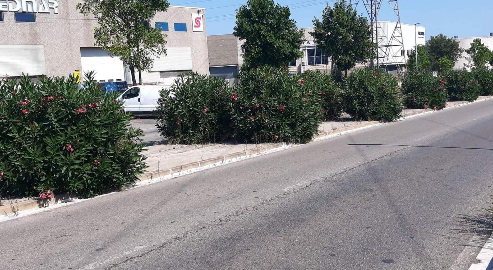Males herbes a l'avinguda del Vallès