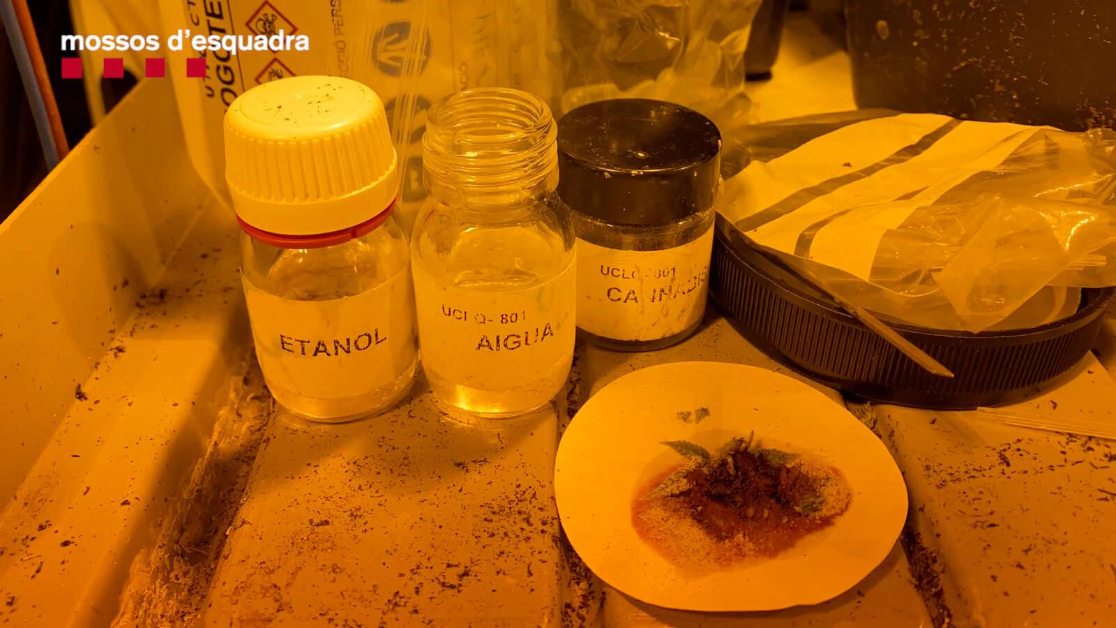 Productes intervinguts en els registres a les plantacions de marihuana