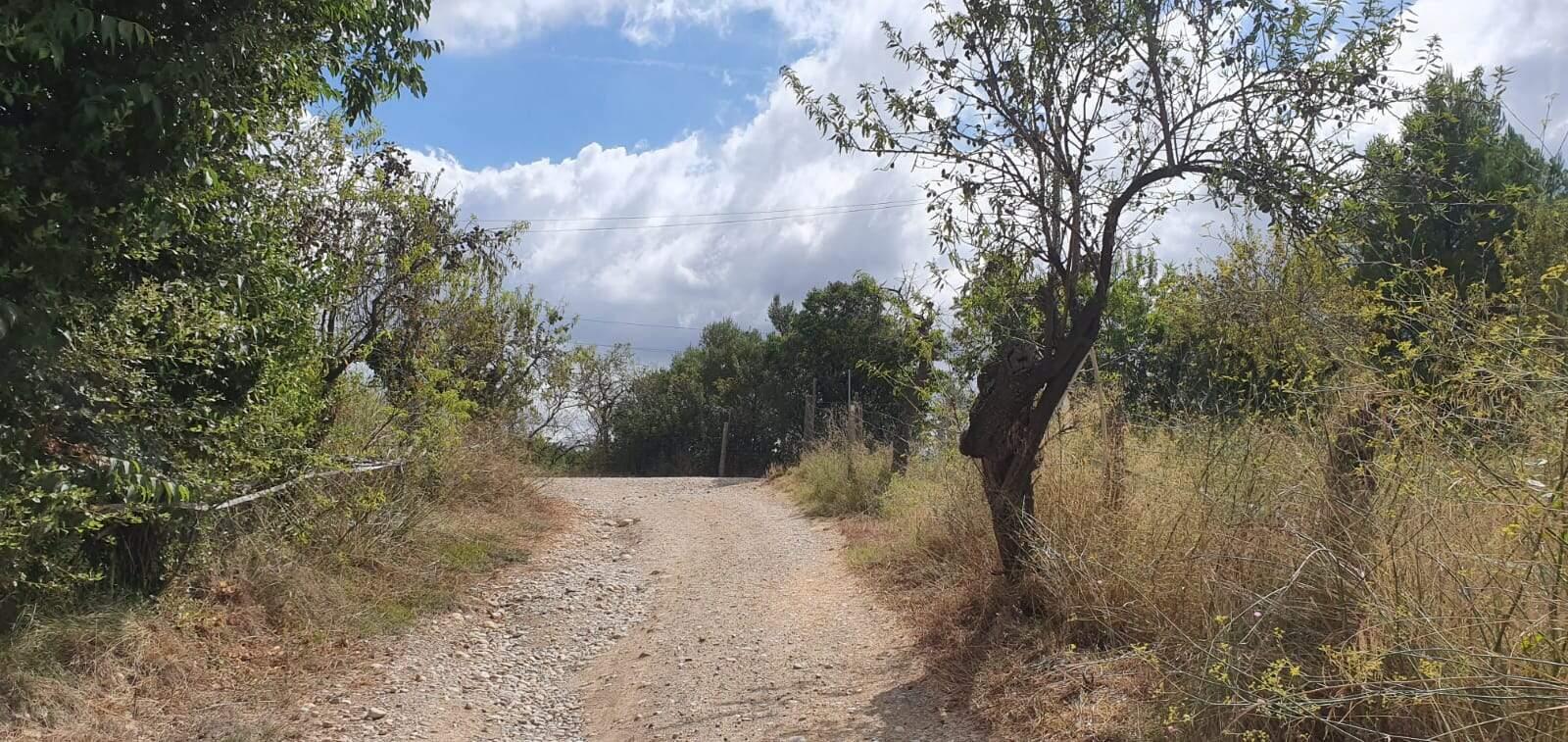 Un dels camins que s'arranjaran
