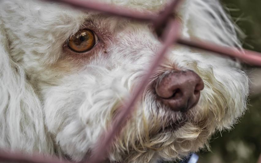 Un gos abandonat   Pixabay