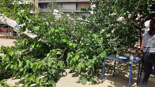 L'arbre ha quedat estirat a terra del passeig Comte d'Egara | Patricia Pérez