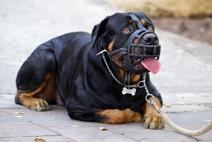 Un gos amb morrió | Pixabay