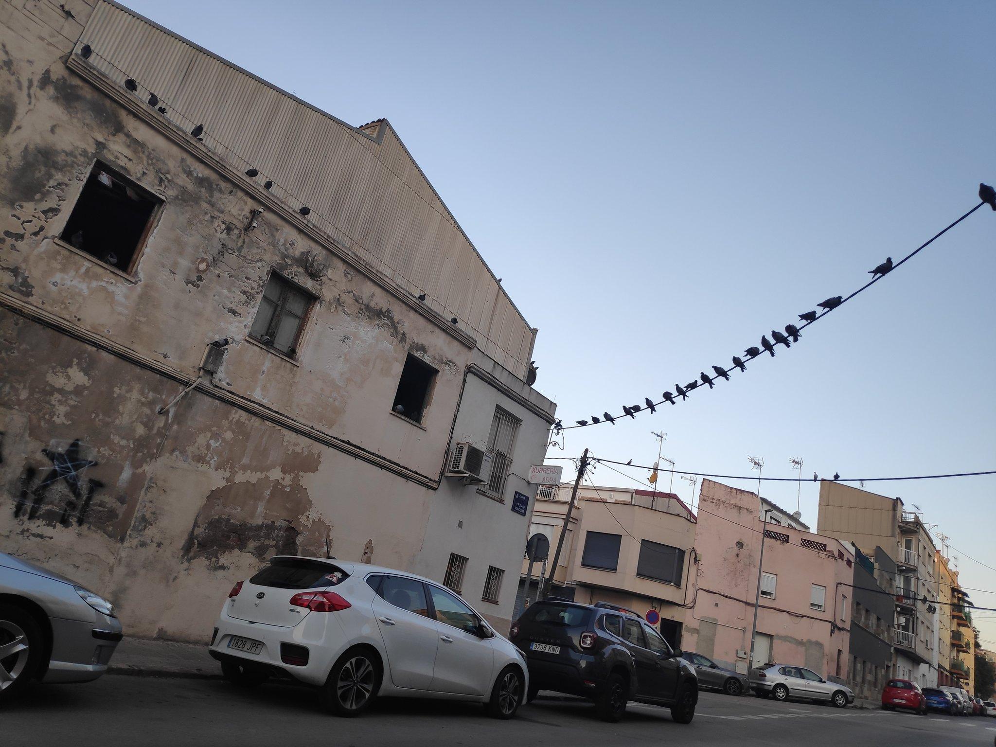 Plaga de coloms al carrer Eduardo Marquina de Terrassa | Paki Robles