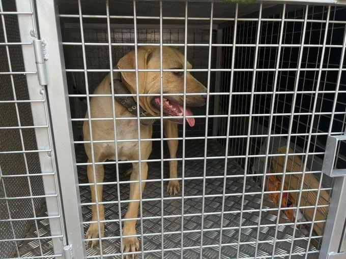 Gossos rescatats aquest divendres en l'operatiu a Les Martines | DAP