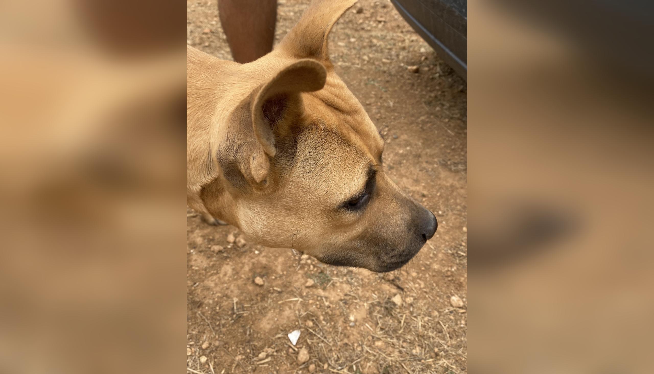 Un dels gossos rescatats aquest divendres d'un solar de les Martines de Terrassa | Carles Caballero