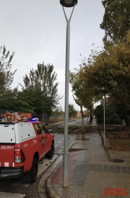 Arbre caigut a Sant Cugat del Vallès/Bombers