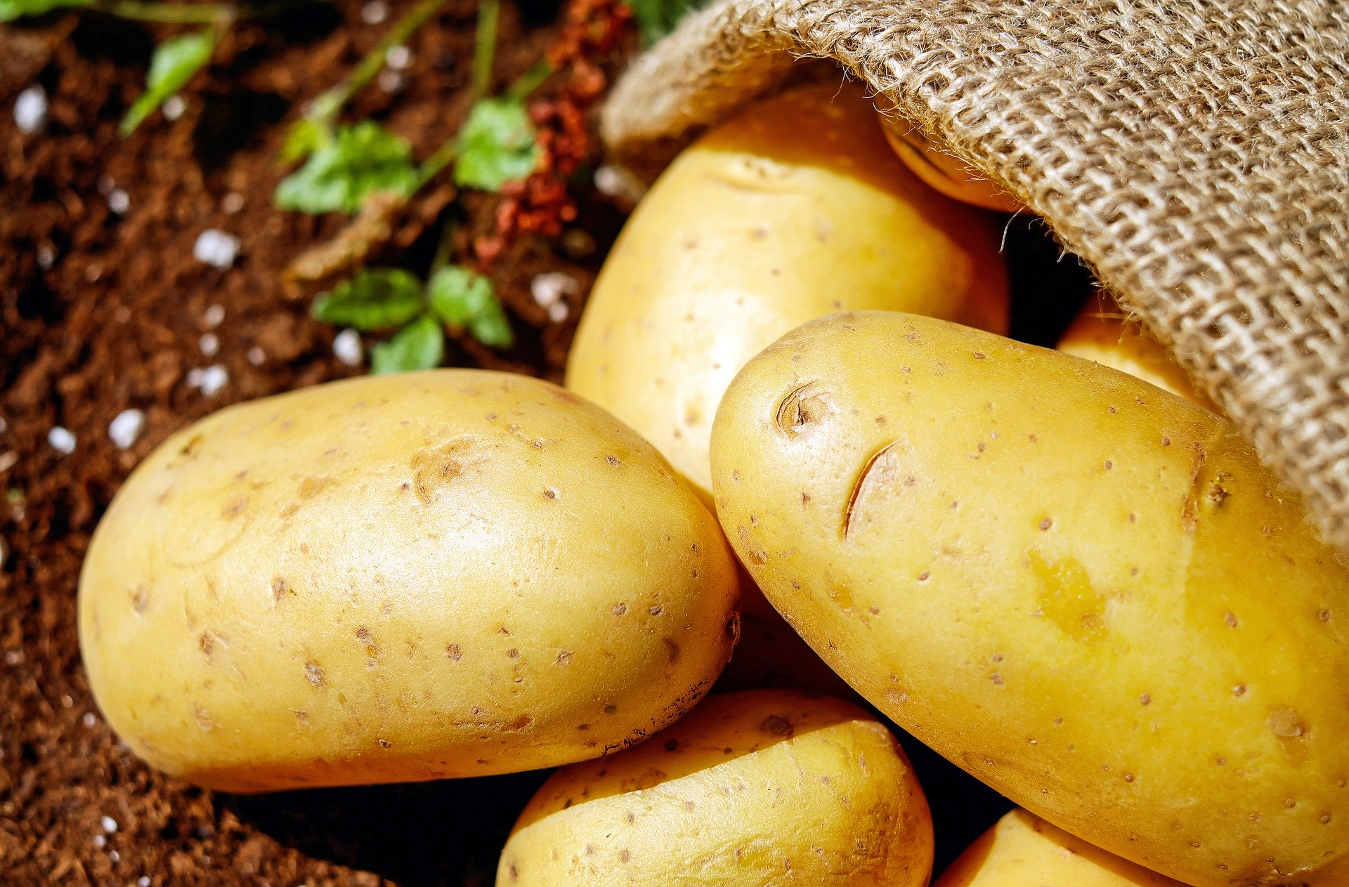 Patates | Pixabay