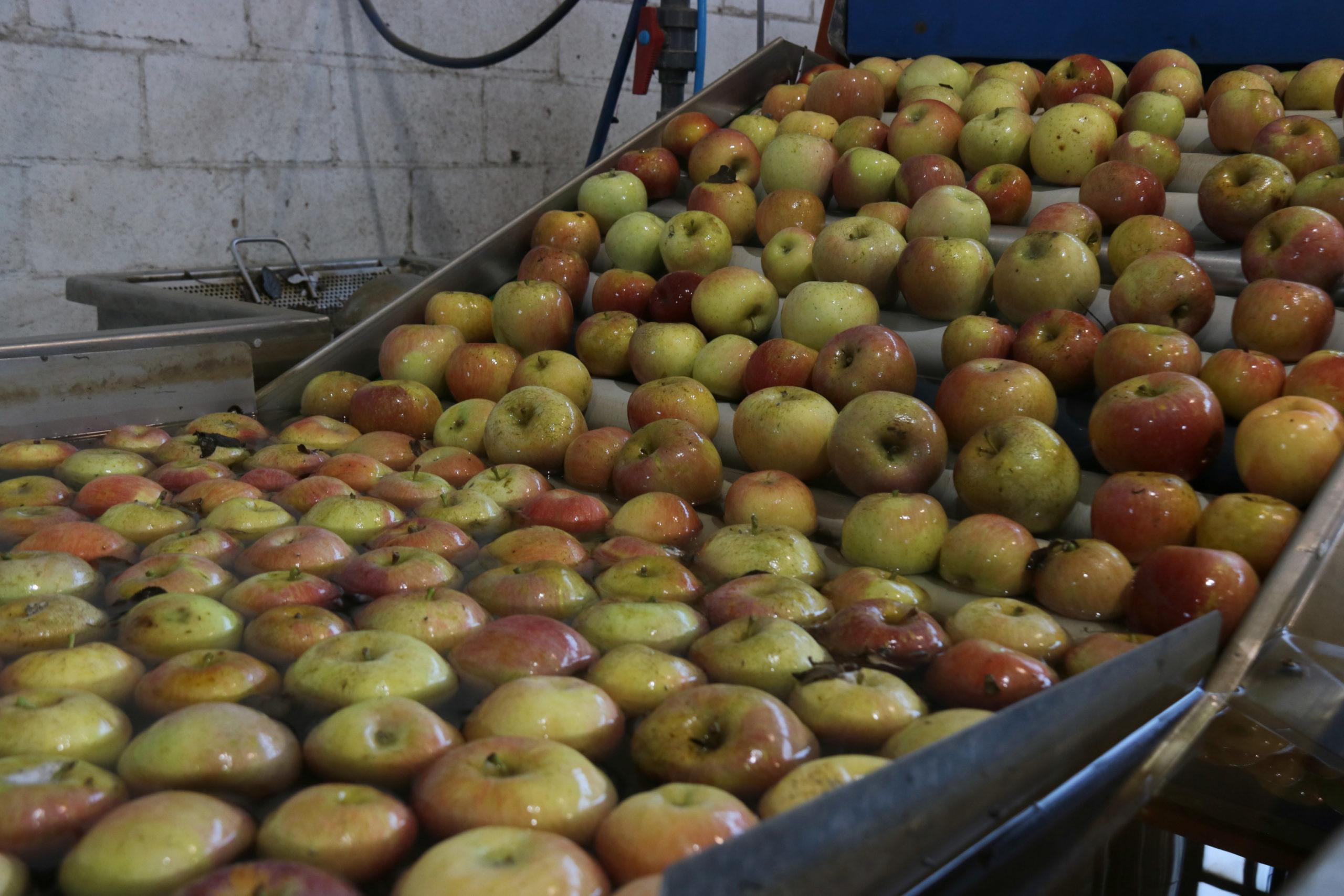 Algunes de les pomes recollides el setembre passat i que estan a punt de ser comercialitzades des de l'Armentera | ACN
