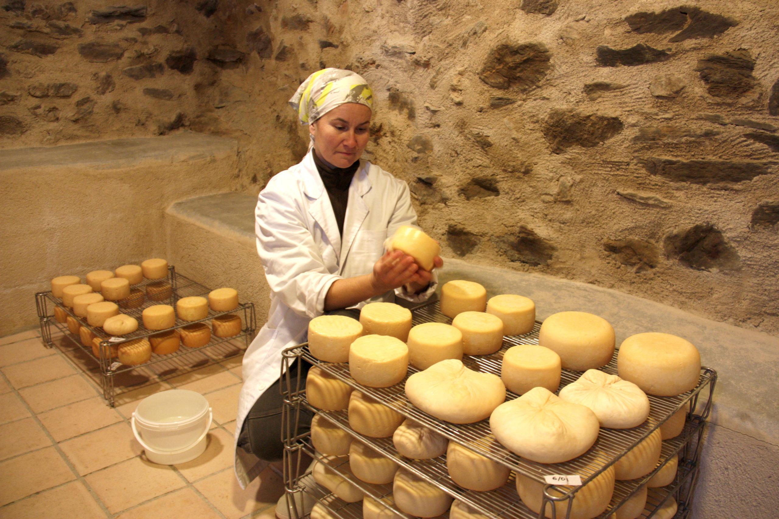 La Sara Gutiérrez, rentant formatges que estan madurant molt a prop del seu ramat de cabres a Éller, a Bellver de Cerdanya   ACN