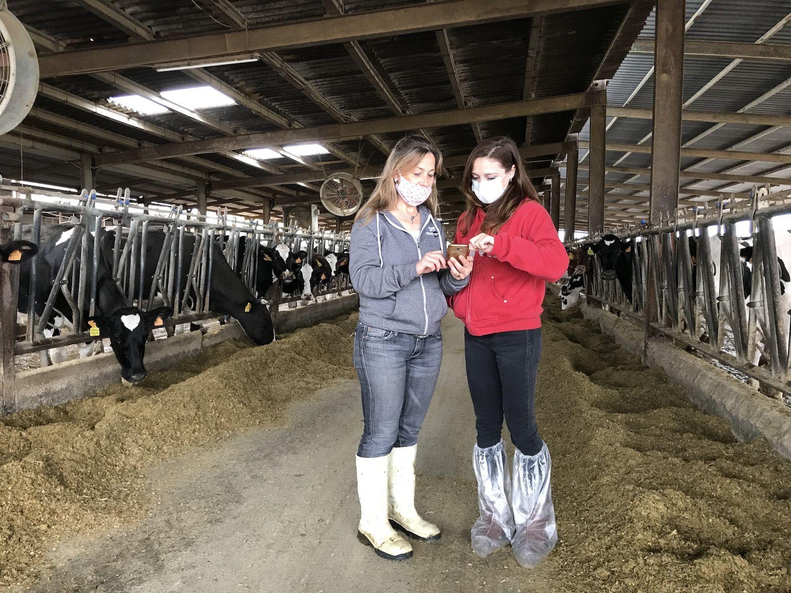 La Roser i la Maria Àngels consulten el mòbil enmig de la granja Serret | Quico Sallés