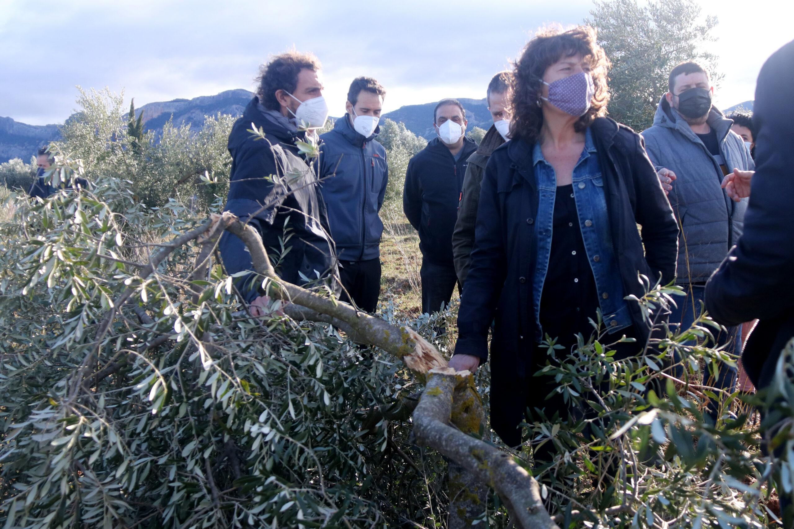La consellera d'Agricultura, Teresa Jordà, al costat d'una olivera jove trencada pel pes de la neu durant una visita a una finca d'oliveres d'Horta de Sant Joan, a la Terra Alta | ACN