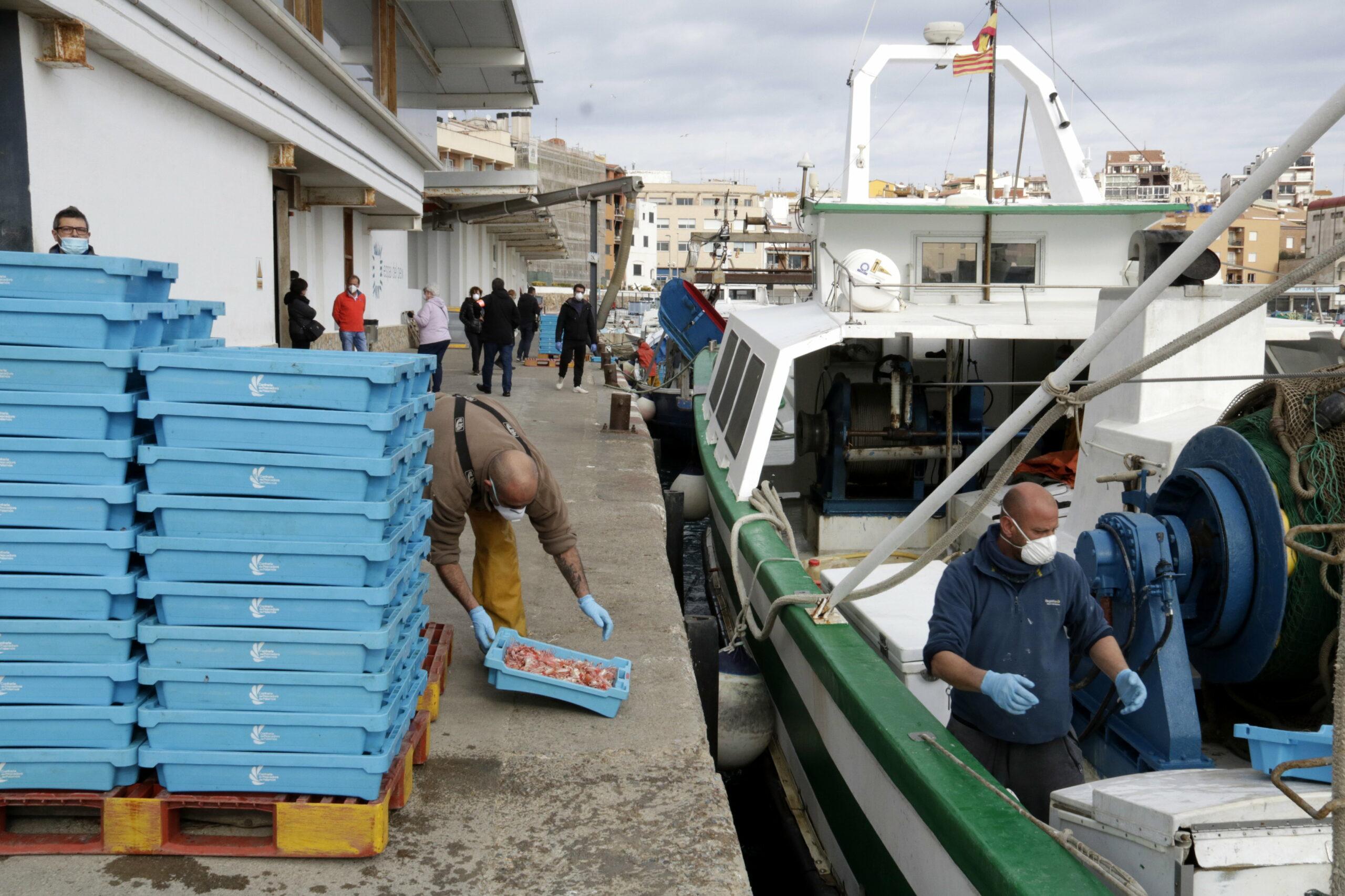 Pescadors de la flota d'arrossegament de Palamós descarregant captures abans de l'aturada | ACN