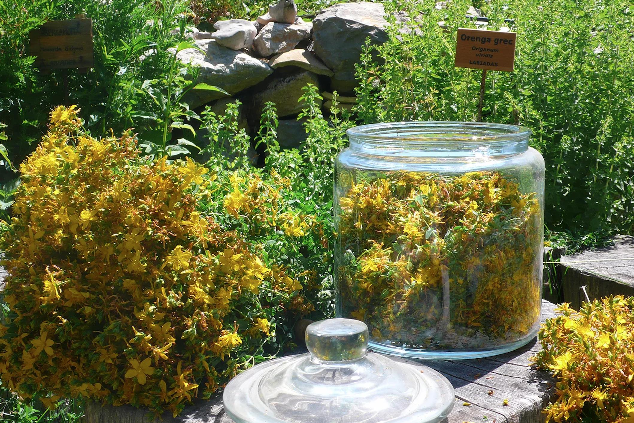 Herbes de l'Herboristeria Nogué   herbesossera.com