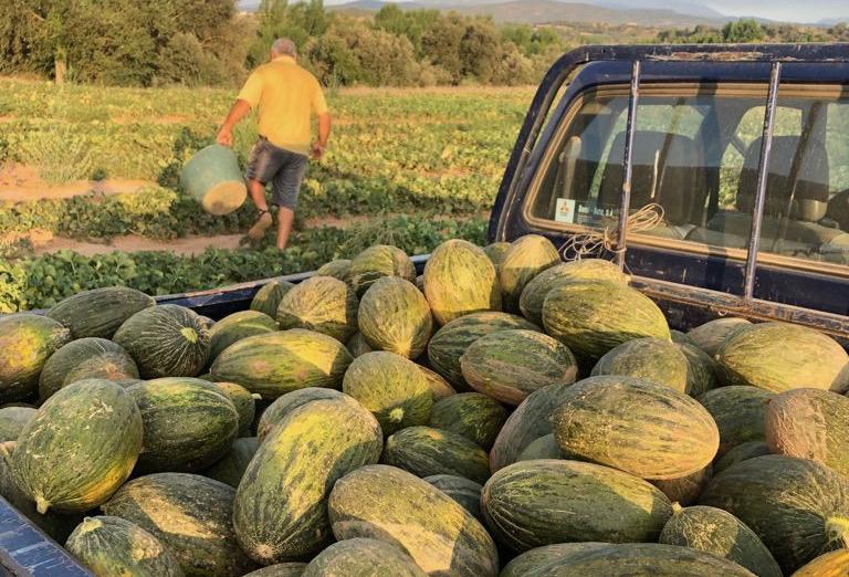 Melons d'Artesa de Segre de la família Antillach | Família Antillach