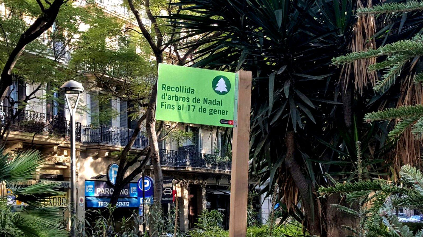 Punt de recollida d'arbres de Nadal a Plaça Letamendi de Barcelona