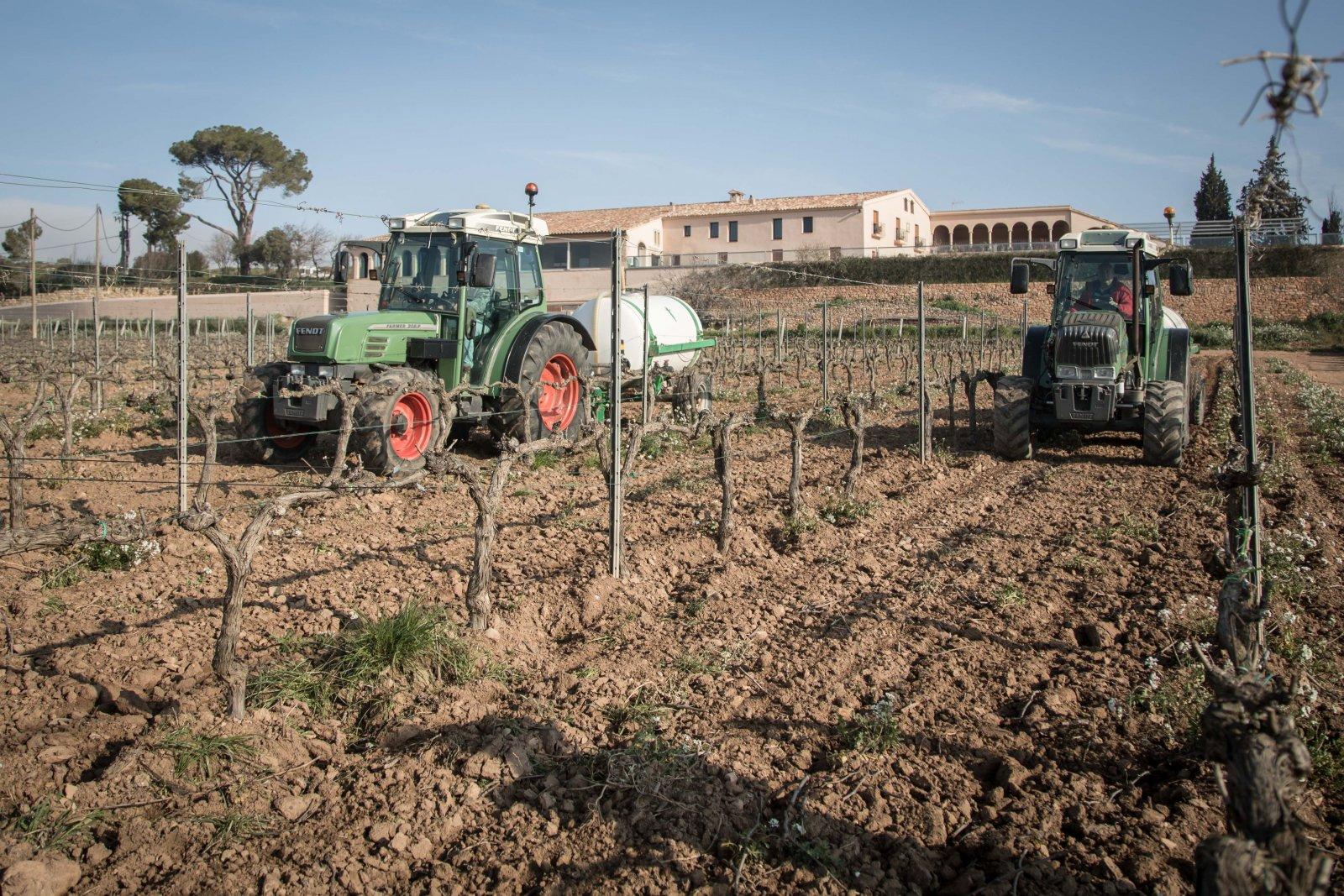 Adob líquid a la vinya de Freixenet al Penedès