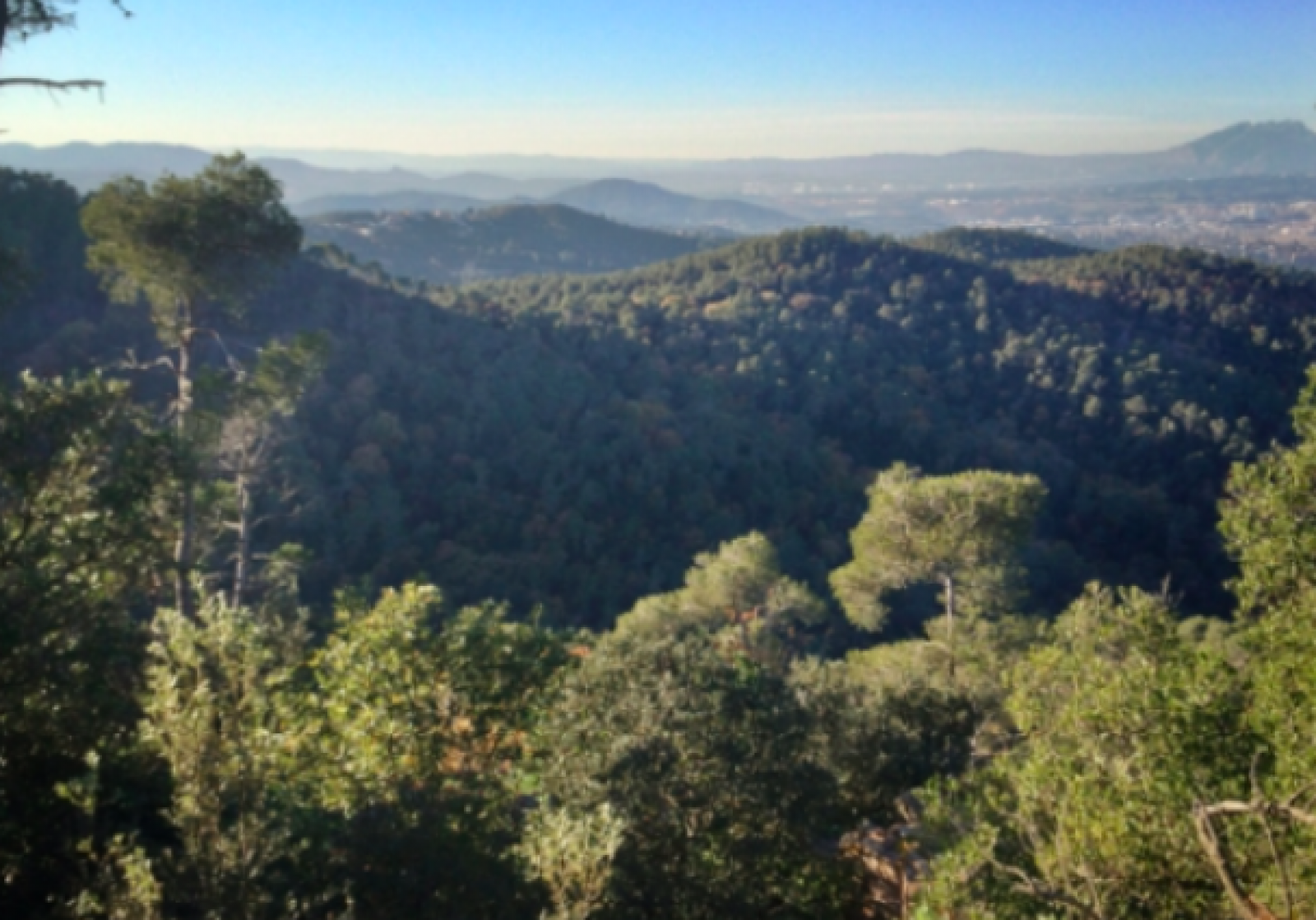 Parc Natural de Collserola