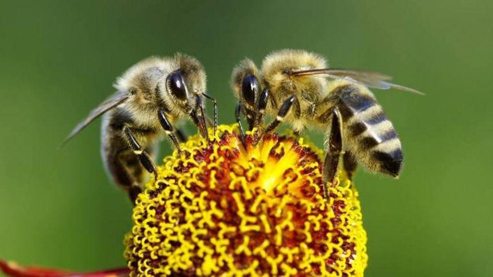 Cada any es redueix el nombre de ruscs d'abelles