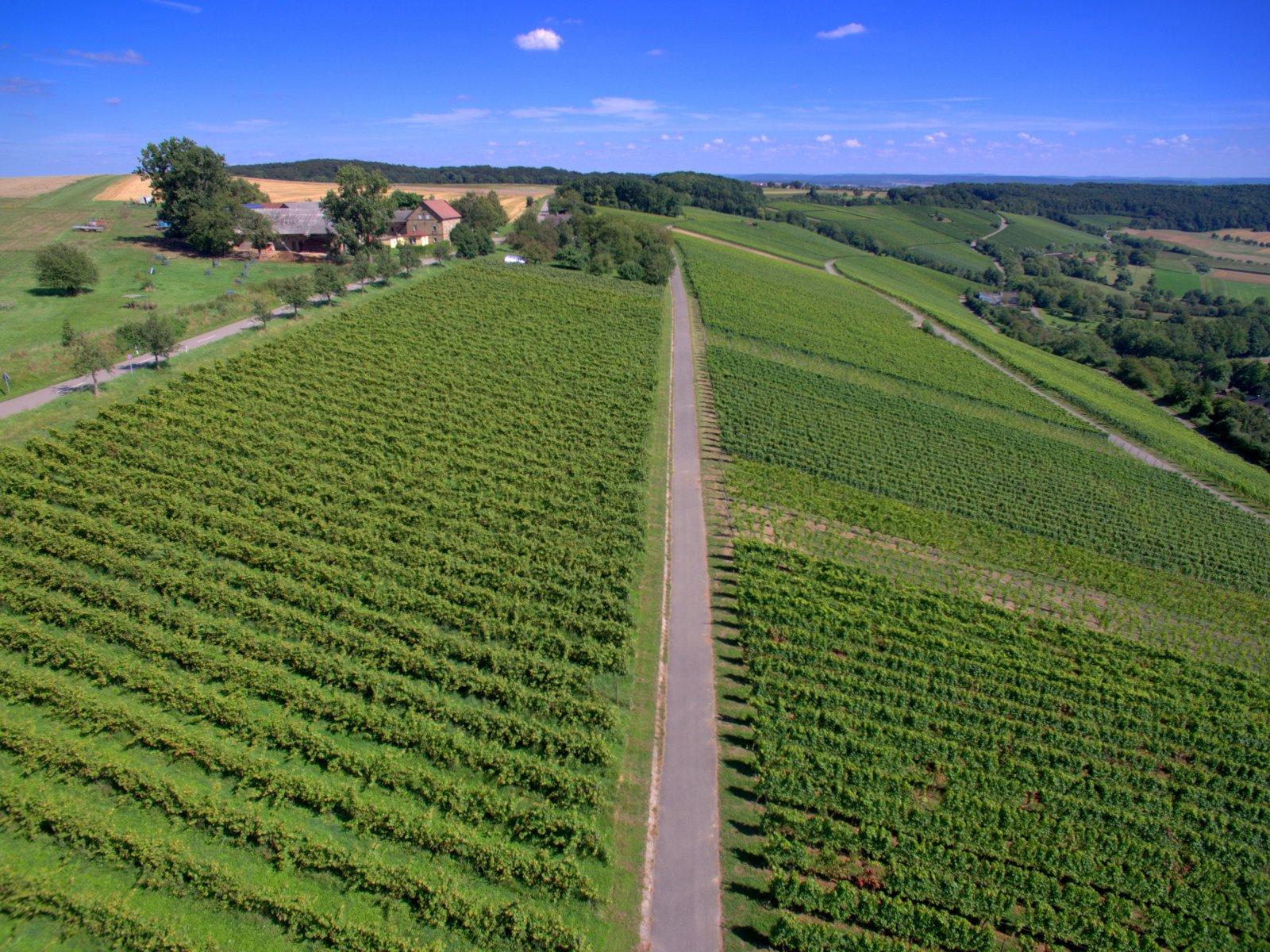 Foto aèria de vinyes