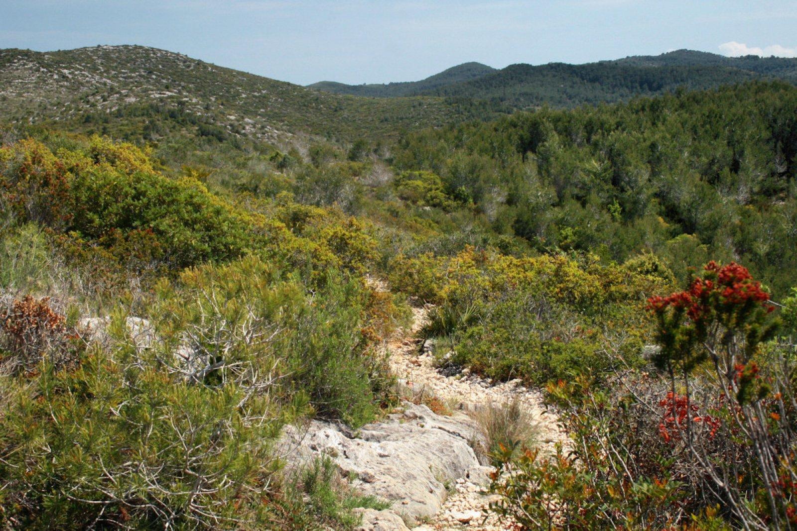 Matollar del Parc Natural del Garraf