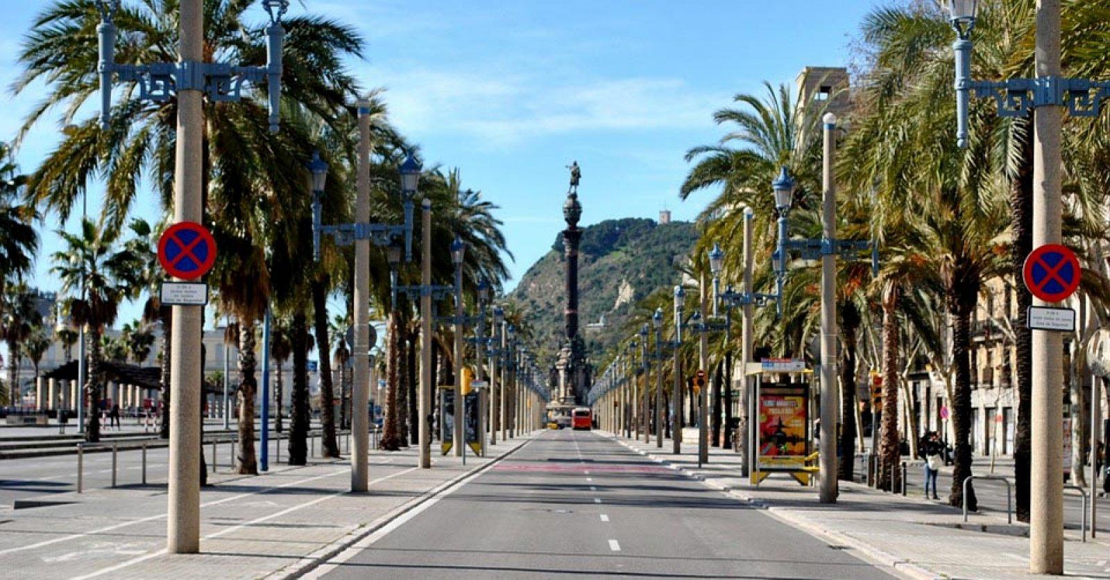 Palmeres a Barcelona, prop de l'estàtua de Colom