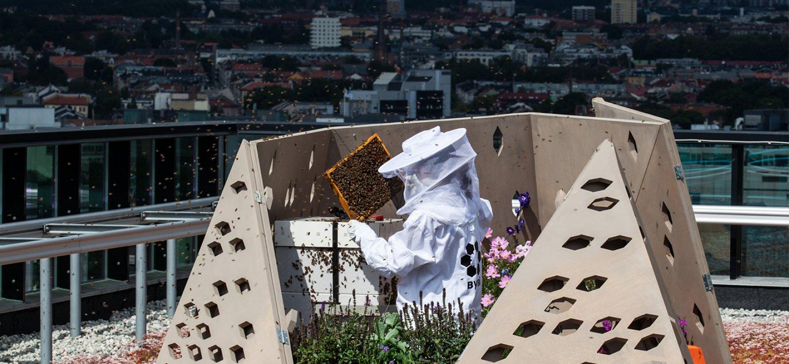 Oslo pren mesures per frenar la disminució d'abelles