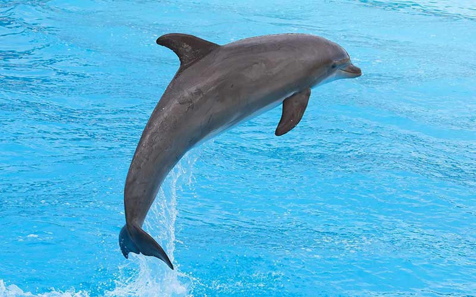 Delfí