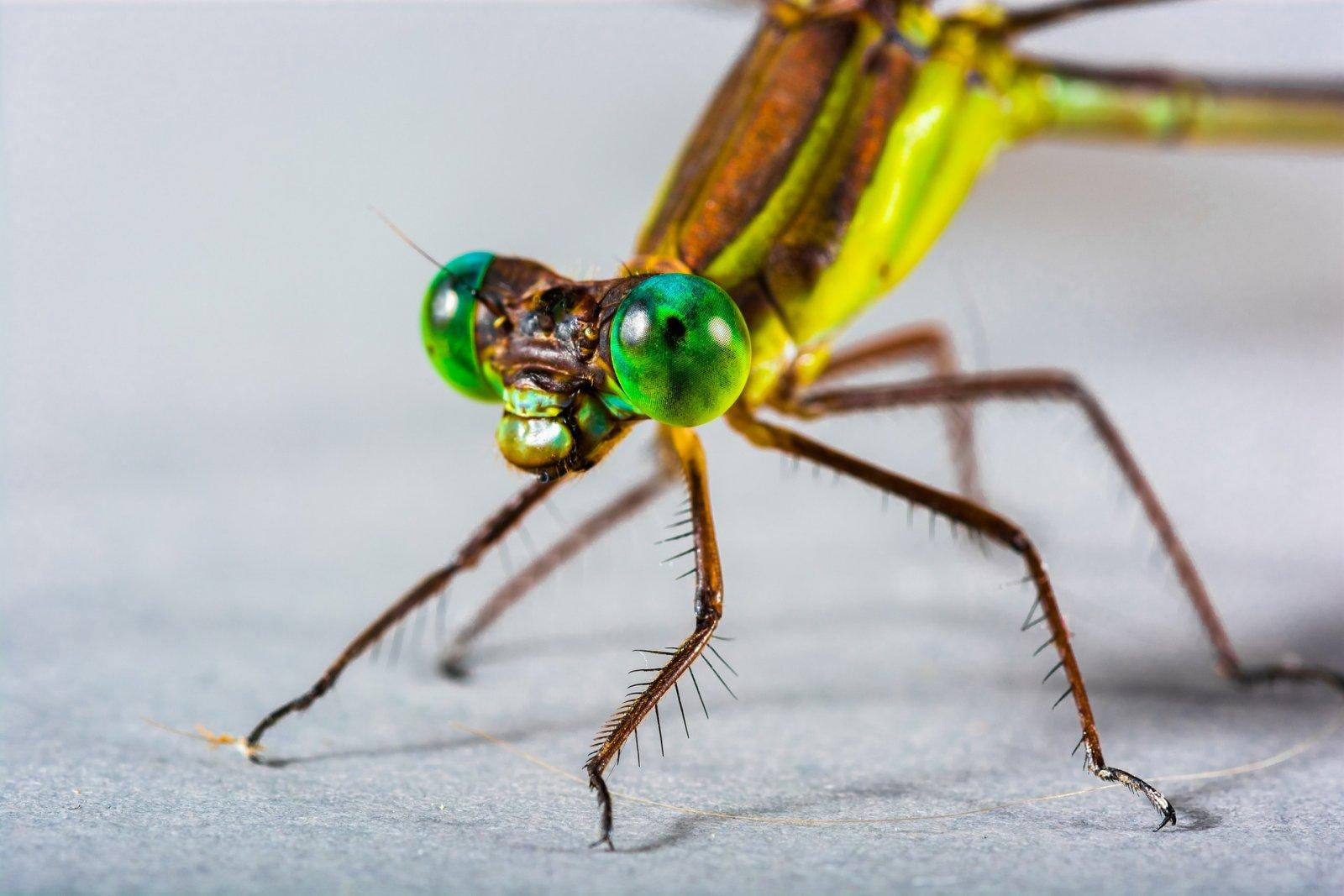 El 80% dels insectes han desaparegut d'Europa en les darreres tres dècades