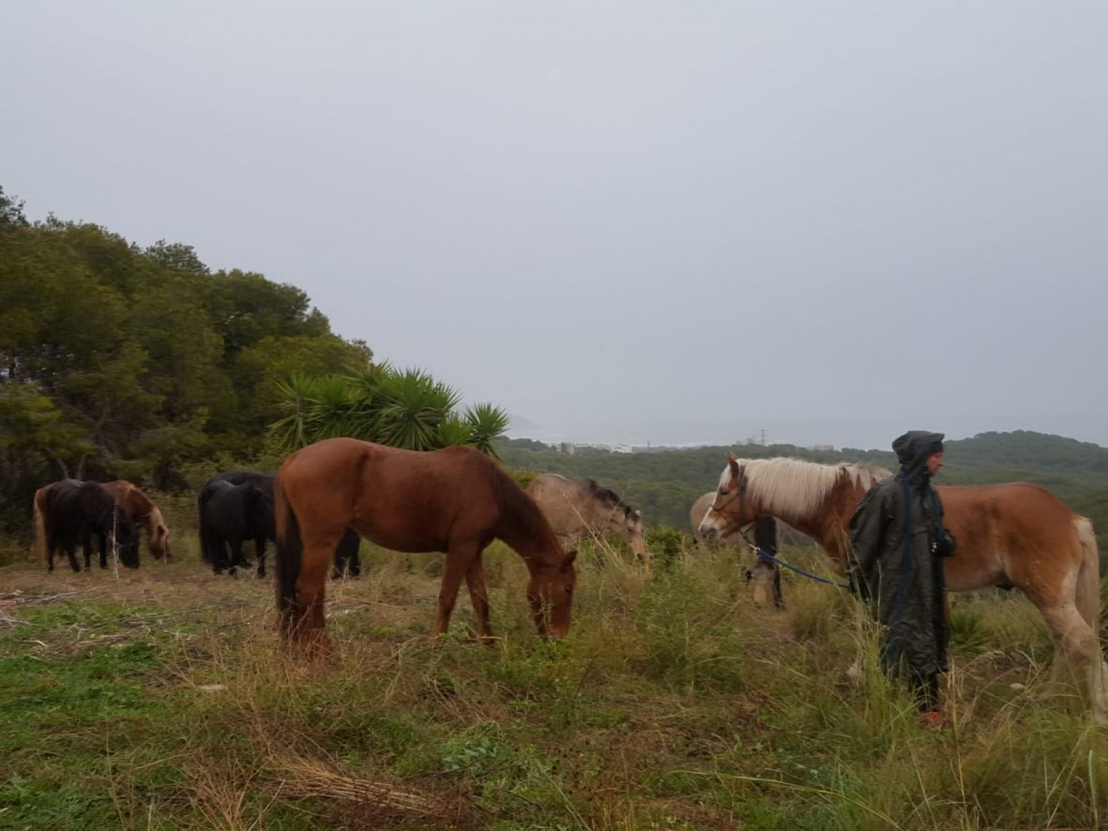 Cavalls Fundació Miranda
