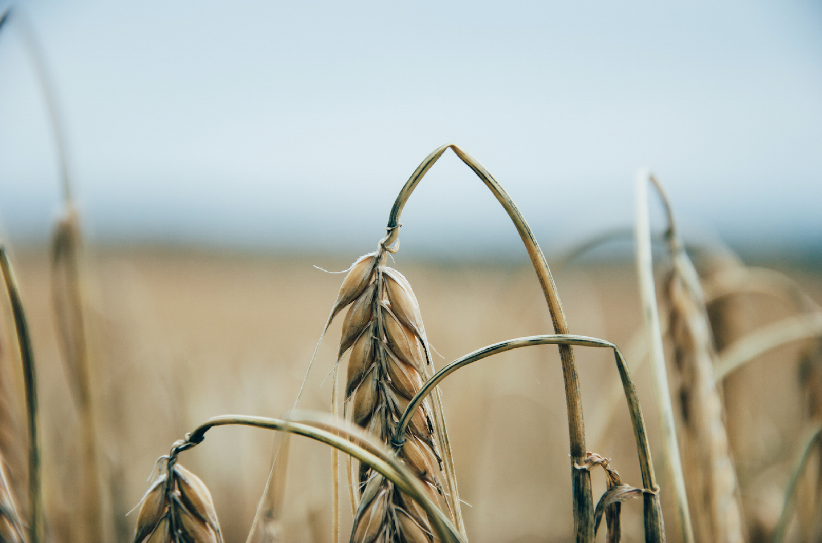 L'acció dels pesticides també complica el medi ambient
