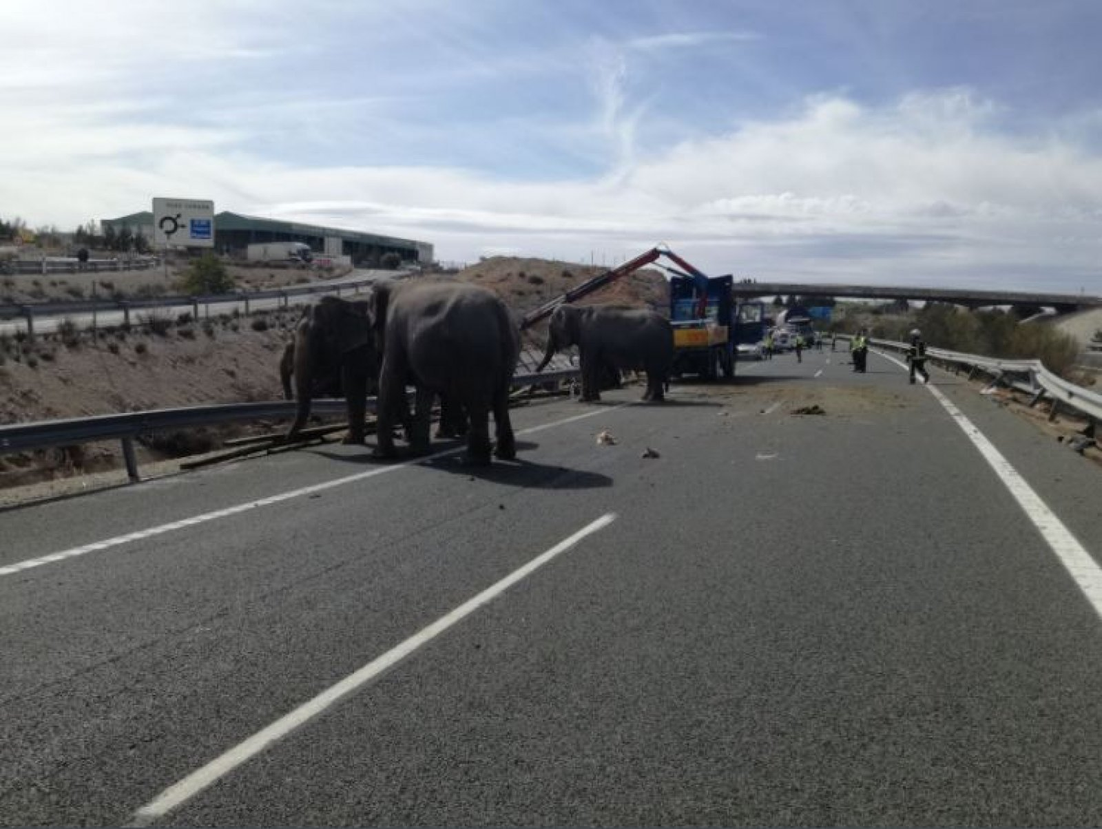 Elefants a l'autovia de Múrcia